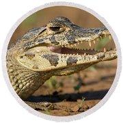 Yacare Caiman Caiman Crocodilus Yacare Round Beach Towel