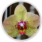 Yellow And Maroon Orchid Round Beach Towel by Kathy Eickenberg