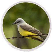 Yellow-bellied Fence-sitter Round Beach Towel
