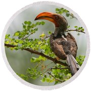 Yellow-billed Hornbill Round Beach Towel by Bruce J Robinson