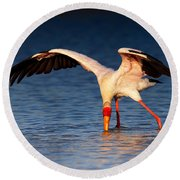 Yellow-billed Stork Hunting For Food Round Beach Towel by Johan Swanepoel