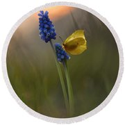 Yellow Butterfly On Grape Hyacinths Round Beach Towel