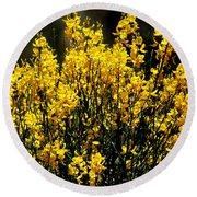 Yellow Cluster Flowers Round Beach Towel by Matt Harang