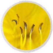 Yellow Round Beach Towel by Dee Cresswell
