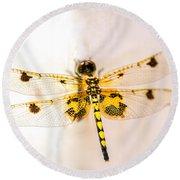 Yellow Dragonfly Pantala Flavescens Round Beach Towel