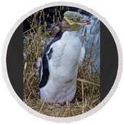 Endangered Yellow Eyed Penguin Hoiho Round Beach Towel by Venetia Featherstone-Witty