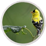 Round Beach Towel featuring the photograph Yellow Finch by Nava Thompson