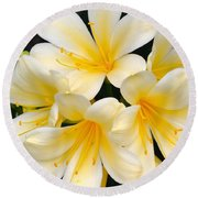 Round Beach Towel featuring the photograph Clivia Yellow Flowers by Jeannie Rhode