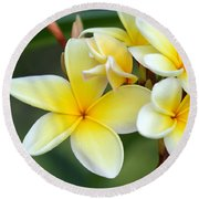 Yellow Frangipani Flowers Round Beach Towel