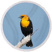 Round Beach Towel featuring the photograph Yellow Headed Blackbird by Jack Bell