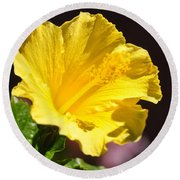 Yellow Hibiscus Open To The Sun Round Beach Towel