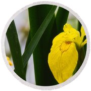 Yellow Iris Round Beach Towel