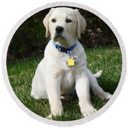 Yellow Lab Puppy Standing Guard  Round Beach Towel
