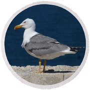 Yellow Legged Gull Round Beach Towel