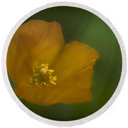 Round Beach Towel featuring the photograph Yellow Poppy by Jacqui Boonstra