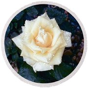 Round Beach Towel featuring the photograph Yellow Rose At Dawn by Alys Caviness-Gober