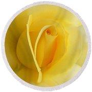 Yellow Rose Portrait Round Beach Towel