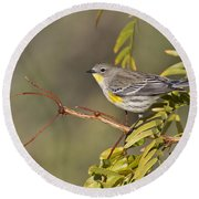 Yellow Rumped Warbler Round Beach Towel