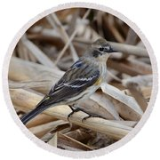 Round Beach Towel featuring the photograph Yellow-rumped Warbler by Debra Martz
