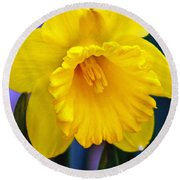 Round Beach Towel featuring the photograph Yellow Spring Daffodil by Kay Novy