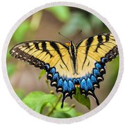 Yellow Tiger Swallowtail Round Beach Towel by Debbie Green