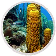 Round Beach Towel featuring the photograph Yellow Tube Sponge by Amy McDaniel