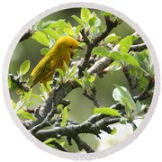 Round Beach Towel featuring the photograph Yellow Warbler In Pear Tree by William Selander