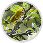 Yellow Warbler In Pear Tree Round Beach Towel