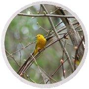 Yellow Warbler Round Beach Towel by Karen Silvestri