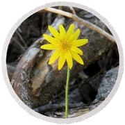 Round Beach Towel featuring the photograph Yellow Wildflower by Laurel Powell