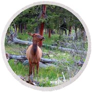 Yellowstone Moments. Doe Round Beach Towel by Ausra Huntington nee Paulauskaite