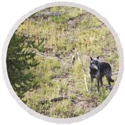 Yellowstone Wolf Round Beach Towel by Belinda Greb