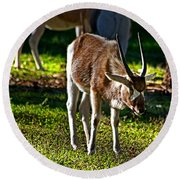 Youngster Addax Round Beach Towel