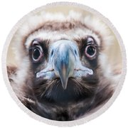 Young Baby Vulture Raptor Bird Round Beach Towel