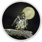 Round Beach Towel featuring the photograph Young Bald Eagle By Moon Light by John Haldane