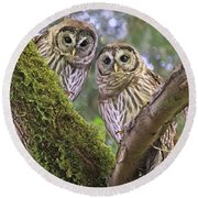 Young Barred Owlets  Round Beach Towel