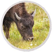 Young Bison Round Beach Towel by Belinda Greb