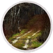 Young Buck And Autumn Round Beach Towel