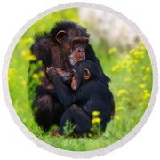 Young Chimpanzee With Adult - II Round Beach Towel