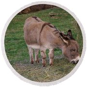 Young Donkey Eating Round Beach Towel by Chris Flees