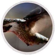 Round Beach Towel featuring the photograph Young Hummingbird Male Anna by Jay Milo