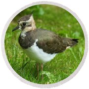 Young Lapwing Round Beach Towel