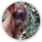 Round Beach Towel featuring the pyrography Young Orangutan Kiss by Shoal Hollingsworth