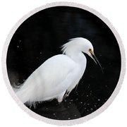 Young Snowy Egret Round Beach Towel by Susan Wiedmann