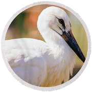 Young Stork Portrait Round Beach Towel by Pati Photography