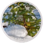 Young Winter Pine Round Beach Towel by Tikvah's Hope