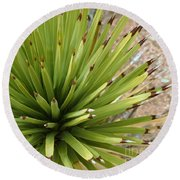 Young Yucca Round Beach Towel