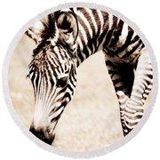 Zebra Foal Sepia Tones Round Beach Towel