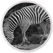 Round Beach Towel featuring the photograph Zebra In Black And White by Kate Brown