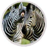 Zebra Showing Its Teeth, Equus Quagga Round Beach Towel
